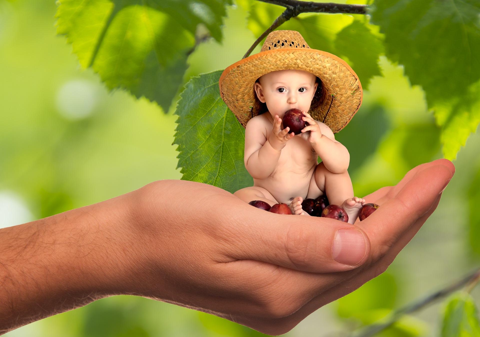 nutricion ninos bebes palma